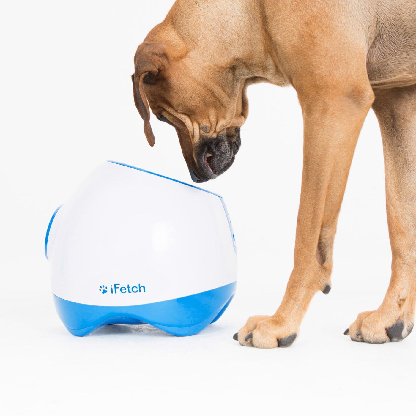iFetch Too, il lancia palle automatico per cani di taglia